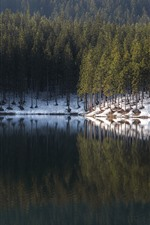 Forest, trees, lake, snow, water reflection, winter