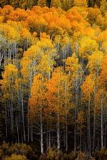 iPhone обои Золотая осень, лес, деревья, природа, пейзажи