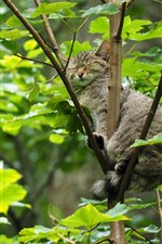 Preview iPhone wallpaper Gray cat sleep on tree