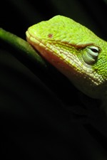 Preview iPhone wallpaper Green lizard, rest, black background