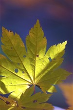 Preview iPhone wallpaper Green maple leaf, nature