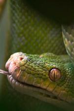 Preview iPhone wallpaper Green snake, look, eyes, head