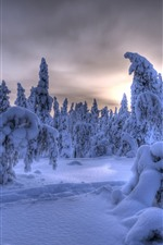 Lapland, Finland, thick snow, trees, winter