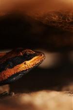 Lizard, hazy