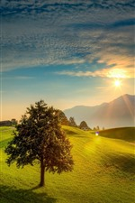 Preview iPhone wallpaper Lonely tree, green field, mountains, sunrise, fog, morning