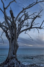 Preview iPhone wallpaper Lonely tree, sea, dusk, sunset