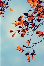 Preview iPhone wallpaper Maple leaves, sky, autumn