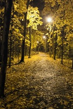 Noite, parque, árvores, luzes, outono