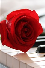 Preview iPhone wallpaper One red rose and piano