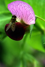 Pink flowers, wasp, hazy green background