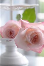 Pink rose, petals, hazy