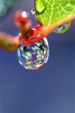 Plants macro photography, water droplets, hazy background