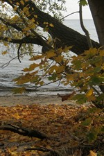 Preview iPhone wallpaper Poland, tree, maple leaves, lake, autumn