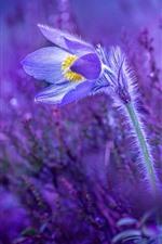 Preview iPhone wallpaper Primrose, sleep-grass, purple background