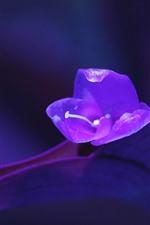 Fotografia macro de flor roxa, fundo nebuloso