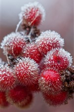Preview iPhone wallpaper Red berries, frost, cold, winter