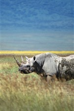 Preview iPhone wallpaper Rhino, horn, grass, wildlife