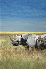 Rhino, horn, grass, wildlife