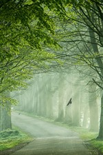 Preview iPhone wallpaper Road, trees, fog, birds, channel, green