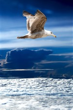Preview iPhone wallpaper Seagull, flight, clouds, sky