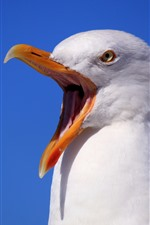 Preview iPhone wallpaper Seagull, scream, beak, white feathers