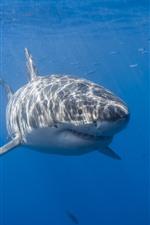 Preview iPhone wallpaper Shark, sea, underwater, sun rays