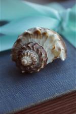 Shell e livro, ainda vida