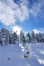 Preview iPhone wallpaper Spruce, winter, trees, thick snow, sun rays, shadow, blue sky
