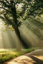 Sun rays, trees, road, morning