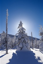 Preview iPhone wallpaper Thick snow, trees, winter, sun rays, shadow