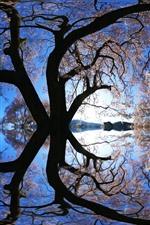 iPhone обои Дерево, озеро, отражение, креативная картинка