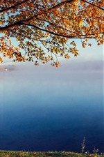 Tree, yellow leaves, lake, fog, morning, autumn