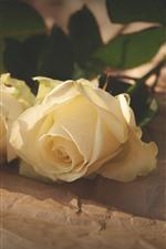 Две желтые розы, солнце