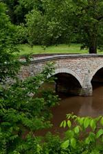 USA, Maryland, trees, river, bridge, green