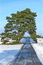 Preview iPhone wallpaper Winter, one tree, road, arch, snow