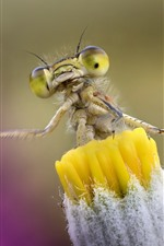 Preview iPhone wallpaper Yellow flower and dragonfly, insect