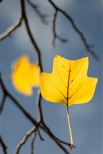 Preview iPhone wallpaper Yellow leaf, twigs, autumn