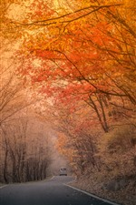 Preview iPhone wallpaper Autumn, trees, red leaves, road, fog