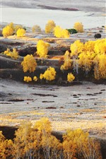 Preview iPhone wallpaper Bashang, golden autumn, trees