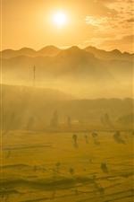Beautiful golden rice fields, morning, sunrise, sun rays, mountains