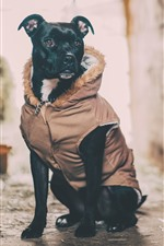 Black dog, coat