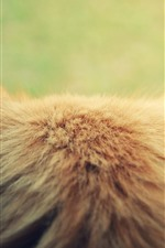 Preview iPhone wallpaper Cat back view, head, ears