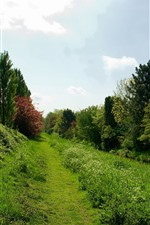 Preview iPhone wallpaper Countryside, green grass, bushes, trees