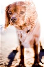 Preview iPhone wallpaper Dog, sunshine, backlight, beach, sea