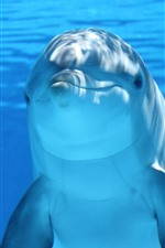 Preview iPhone wallpaper Dolphin, look at you, underwater