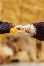 Preview iPhone wallpaper Eagle flight, wings, hazy background