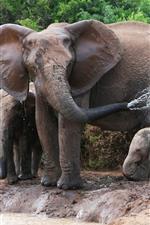 Preview iPhone wallpaper Elephants, family, water splash