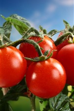 Preview iPhone wallpaper Fresh tomatoes