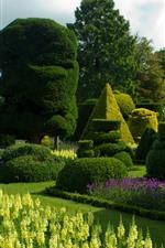 Garden, bushes, green
