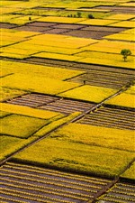 Preview iPhone wallpaper Golden rice fields, beautiful scenery